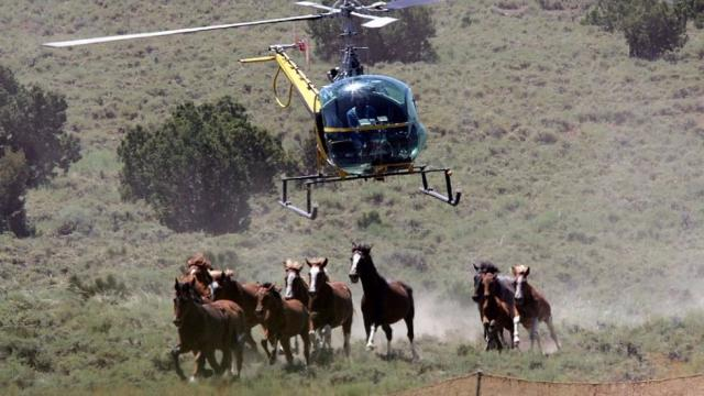 Wild Horse Roundup © Getty Images